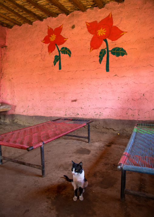Cat in a restaurant with decorated walls, Kassala State, Kassala, Sudan