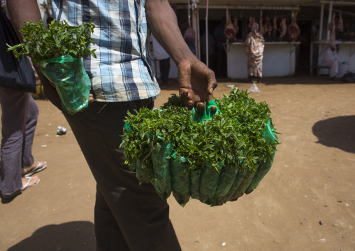 Sudan, Khartoum State, Omdurman, mint seller