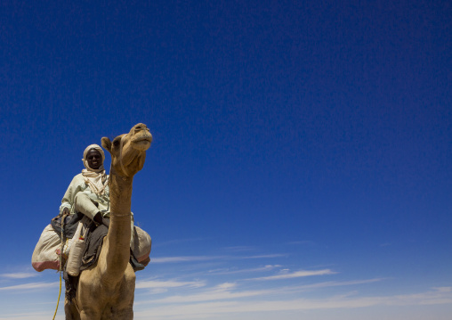 Sudan, Northern Province, Dongola, camel herder going to egypt with a caravan