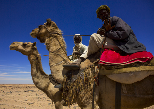 Sudan, Northern Province, Dongola, camel herders going to egypt with a caravan