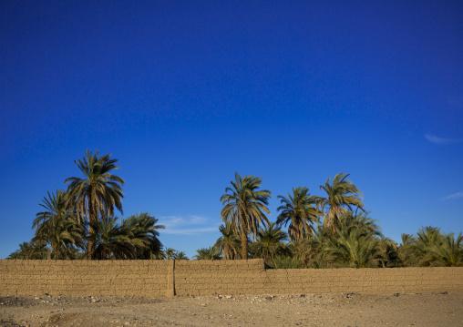 Sudan, Nubia, Soleb, palm trees
