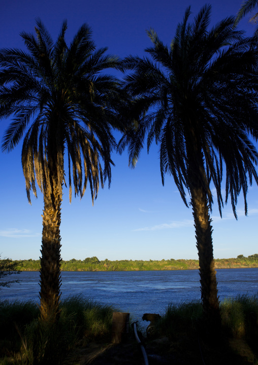Sudan, Nubia, Soleb, palm trees on nile river banks