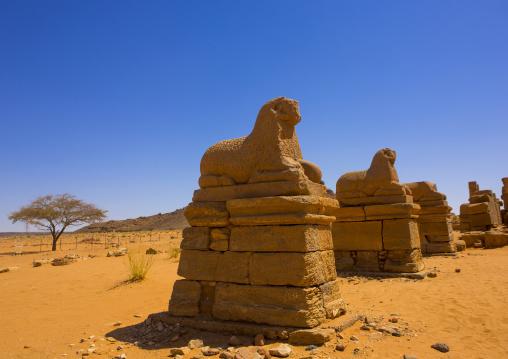 Sudan, Nubia, Naga, rams statues in amun temple rams