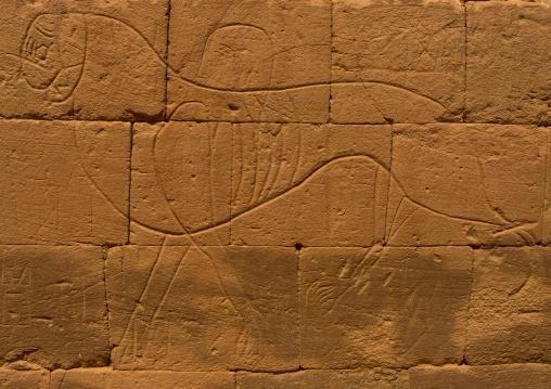 Sudan, Nubia, Naga, lion carving on the elephant temple at musawwarat es-sufra