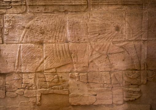 Sudan, Nubia, Naga, elephant relief, interior of the lion temple in musawwarat es-sufra