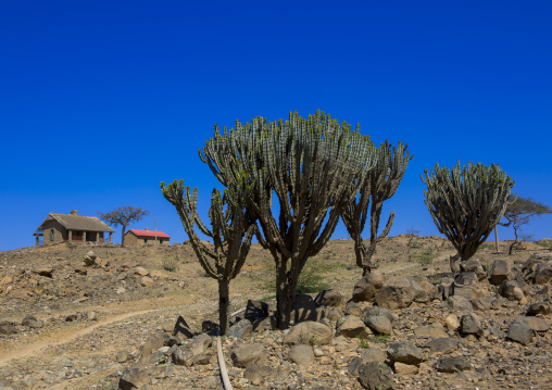 Sudan, Red Sea Hills, Erkowit, old english house with euphorbias