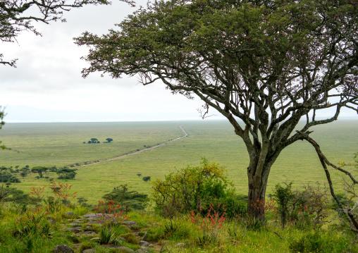 Tanzania, Mara, Serengeti National Park, view over the plain