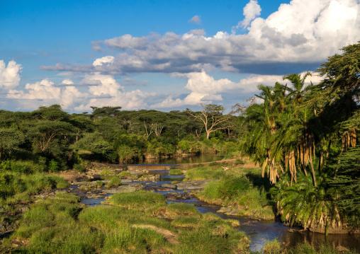 Tanzania, Mara, Serengeti National Park, the palm-lined shores of a small river flowing through a lush savannah grassland