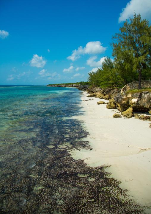 Tanzania, Zanzibar, Matemwe, muyuni beach