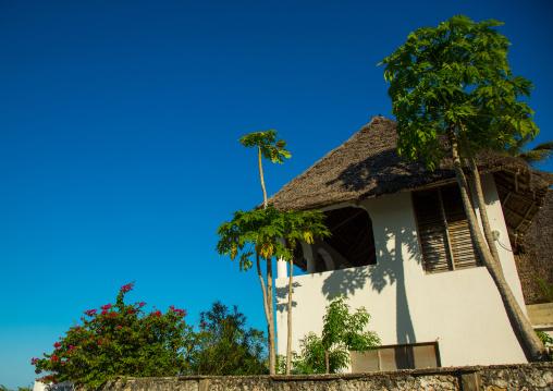 Tanzania, Zanzibar, Jambiani, house and trees at coast