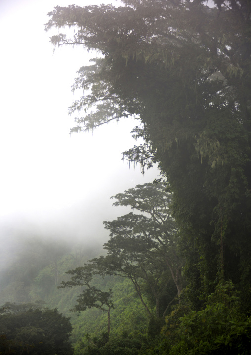 Tanzania, Arusha Region, Ngorongoro Conservation Area, the crater in the fog