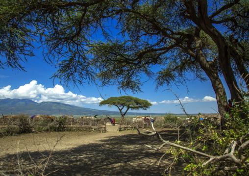 Tanzania, Ashura region, Ngorongoro Conservation Area, maasai village fence