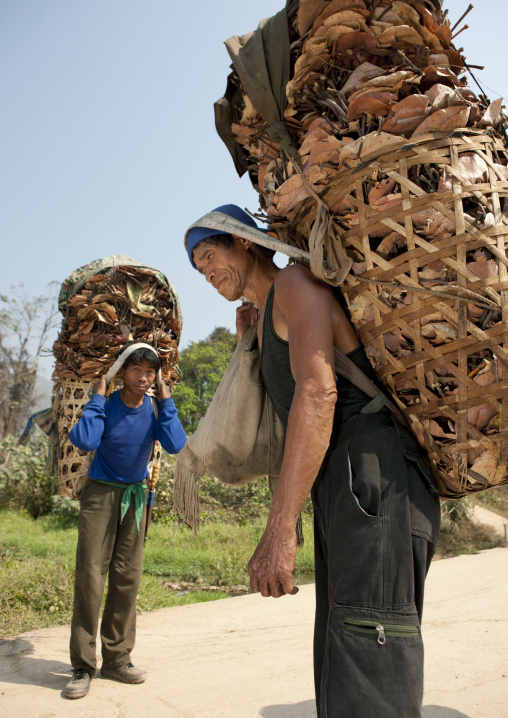 Karen men collecting leaves for roofs, Thailand