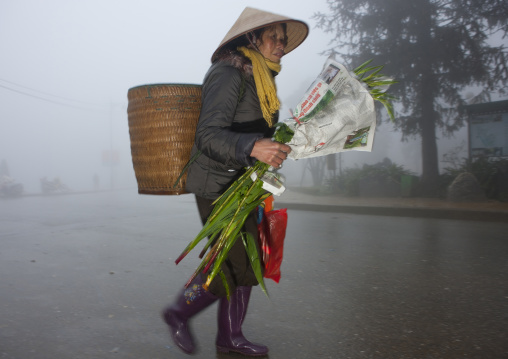 Old woman with sedge hat carrying bamboo branches, Sapa market, Vietnam