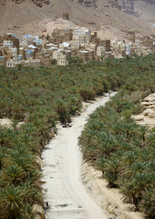 Prospect Of Wadi Doan Covered By Palm Trees And Buildings, Hadramaut, Yemen