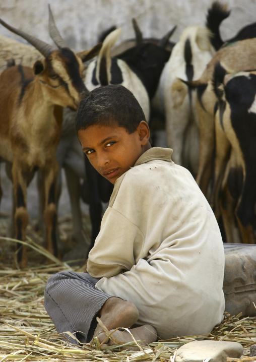 Boy Sitting In Front Of The Goats In A Market, Yemen