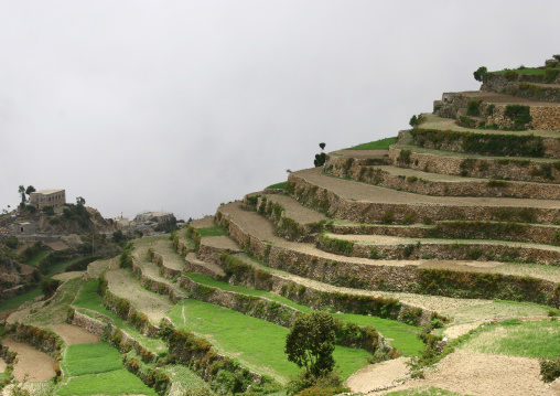 Terrace Cultivation, Manakha, Yemen