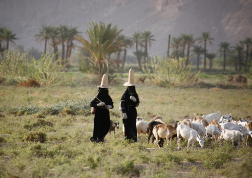 Hadramaut Women Grazing Sheep In A Field, Yemen