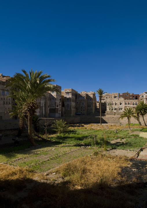 Sanaa Gardens In Old Town Surrounded By Traditionnally  Buildings, Yemen