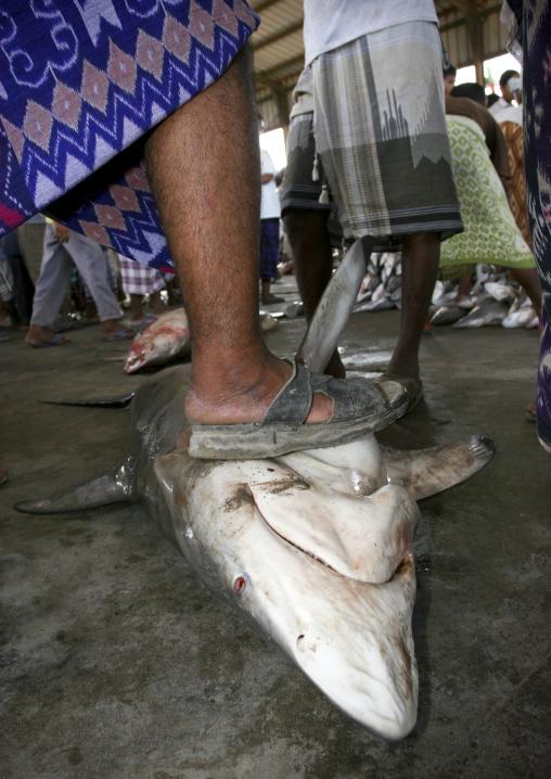 Man Stepping On A Shark At Al Hodeidah Fish Market, Yemen