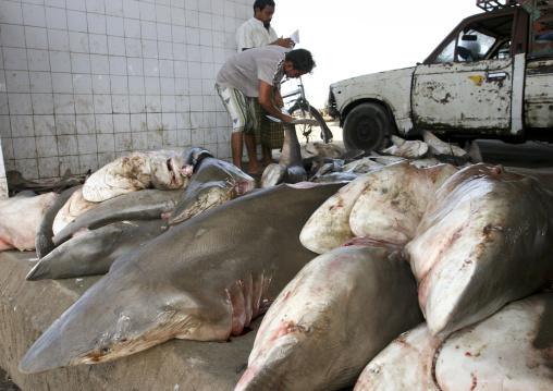 Pile Of Sharks And Fishermen In Al Hodeidah Fish Market, Yemen