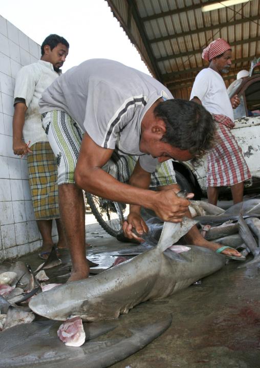 Man Cutting The Fin Of A Shark In Al Hodeidah Fish Market, Yemen